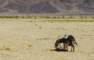 The Hashemite Kingdom of Jordan Photography By Charlotte Farhan Desert Donkey