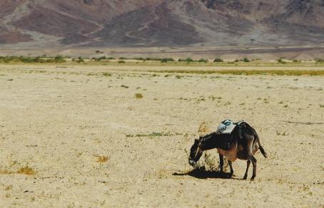 The Hashemite Kingdom of Jordan Photography By Charlotte Farhan Desert Donkey