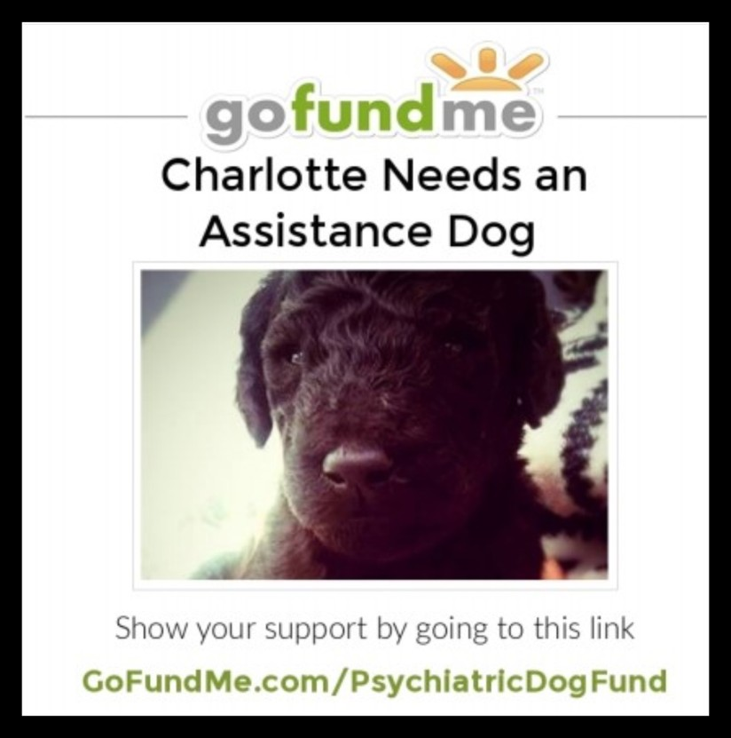 Charlotte Needs an Assistance Dog – Please help me have a better, more independent life.
