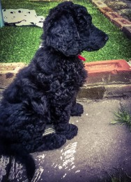 Puppy training has begun...